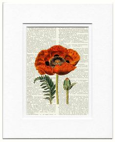 poppy I vintage artwork printed on page from old by FauxKiss