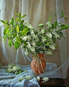 Irina Prihodko Plant Hanger, Still Life, Macrame, Wreaths, Plants, Photography, Home Decor, Photograph, Decoration Home