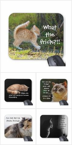 Funny slogans and photographs on mouse pads featuring cats with attitude to make you smile at work.