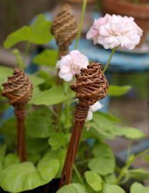 7 Best Garden images | Garden, Garden mum, Wild flower meadow