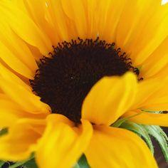 Sending a little #sunshine your way today!  #mondaymotivation #bethechange…