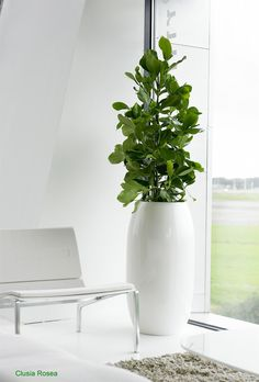 Office plants    #office #ironageoffice #greenoffice http://www.ironageoffice.com/