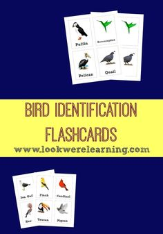 It's the time of year when birds start heading south for the winter. Learn to spot common birds with these bird identification flashcards!