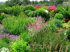 While a bit hard to see in this small image, the plant with the gray foliage and magenta flowers in the center is Rose Campion, a very hardy perennial that really stands out in the garden. Self seeds freely, but not invasive.