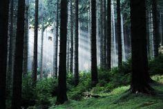 #woodedbliss