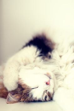 I can't even right now.. 💕😴 #catoftheday #catlover #cats #lovecats #instacat #kitten #kitty #ilovemycat #catsagram #kittens #meow #cats_of_instagram #catlovers #bestmeow #instagramcats #cat_features #catlife #cutecat #catsofig #lovekittens #petstagram #kittycat #gato #kittensofinstagram #caturday #neko #pets #petsagram #catsofinstagram #catstagram