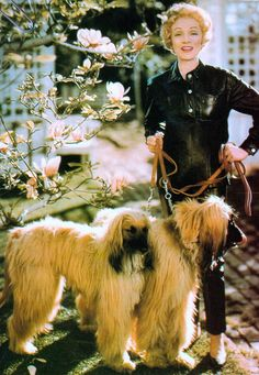 MARLENE DIETRICH the legendary actress & stage performer, in black leather two piece catsuit with two afghan dogs 1952 (please follow minkshmink on pinterest) #marlenedietrich #marlenecolor