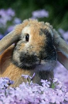 love lavender and bunnies