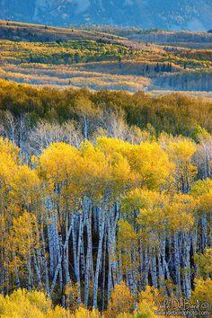 Kebler Pass . Colorado