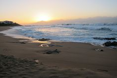 Best Beaches In South Africa North Beach, Beach Town, West Coast Fishing, Buffalo City, Clifton Beach, South Afrika, Best Sunset, Sand And Water, Africa Travel