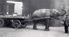 Scrap metal collecting was commonplace in Sheffield. One wartime icon of Sheffield would come from the steel industry named Lizzie the Indian Elephant! Sheffield Pubs, Sheffield Steel, Sheffield England, War Elephant, Indian Elephant, Leeds England, Metal Art Projects, Scrap Metal Art, Animal Facts