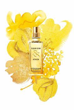 Fleur d'Or & Acacia L`Occitane en Provence perfume - a new fragrance for women 2013