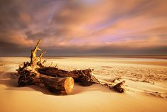 Driftwood, Alnmouth Beach, Northumberland