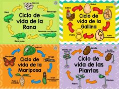 Teaching Plan, Teaching Spanish, Teaching Tools, Science Activities, Toddler Activities, Ela Anchor Charts, English Activities, School Decorations, Science Fair