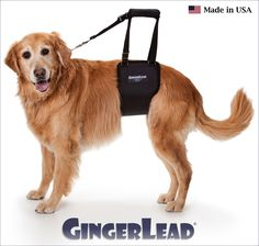 The GingerLead Dog Support & Rehabilitation Harness is a premium belly sling with a leash & handle to help dogs with weak hind legs walk. It's ideal for senior or disabled dogs needing some assistance with their mobility or balance, dogs suffering from arthritis, degenerative myelopathy or other debilitating conditions, or dogs recovering from knee, hip or back injuries. GingerLeads are available in male and female slings for toy to giant breed dogs.  Visit http://www.gingerlead.com for…