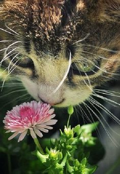 Cats remind us to slow down, experience the world, and get a good sniff of a flower every once and a while.