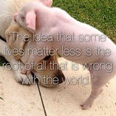 """when you understand why we don't eat cats dogs, you'll realize why we shouldn't eat pigs, chickens, or any other animals or their """"byproducts"""". #govegan"""