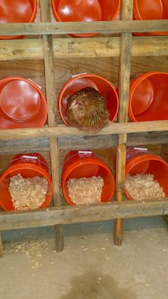 i used home depot 5 gallon buckets for nesting boxes