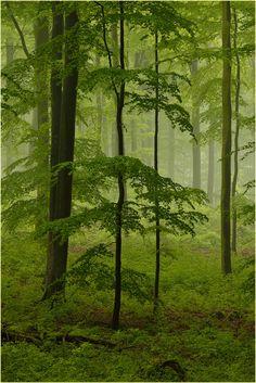 """"""". La degradación de los espacios verdes refleja la degradación de la sociedad."""" Carlos Thais ,paisajista."""