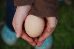 Keep your Hens Laying Eggs