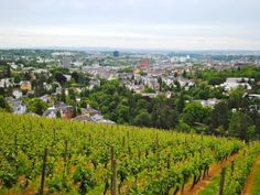 A view of Wiesbaden, Germany from Neroberg.
