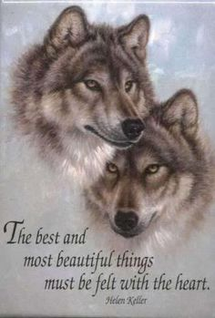 Find wolf figurines, wolf t shirts, wolf art and wolf pictures at EverythingWolf. Great wolf and dog lover gifts, Popular and unique items. Wolf Photos, Wolf Pictures, Beautiful Creatures, Animals Beautiful, Cute Animals, Beautiful Things, Beautiful Images, Wolf Spirit, My Spirit Animal