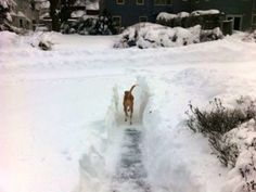 Helpful winter safety tips for pets