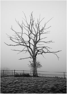 - (dead tree, pretty, black and white, greyscale, branches, limbs, exposed, out in the open, nowhere, fence, pasture, lonely, eerie) -