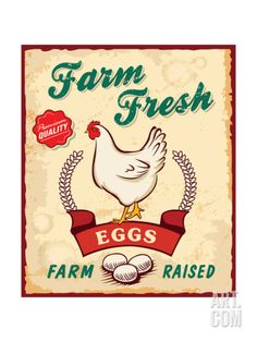 Retro Fresh Eggs Poster Design Print by Catherinecml at Art.com