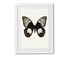 Print in lijst Papilio Aegeus, multicolour, 30 x 40 cm