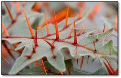 10 Creepy Plants That Shouldn't Exist | Cracked.com