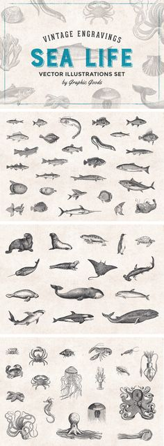 Fishes & Sea Life Engravings Set by Graphic Goods on @creativemarket