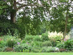 Landscape Design, Plants, Landscape Designs, Plant, Planets
