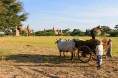 https://flic.kr/p/tkFP87 | Bagan, Myanmar - Daily Life | Bagan, located on the banks of the Ayeyarwady (Irrawaddy) River, is home to the largest and densest concentration of Buddhist temples, pagodas, stupas and ruins in the world with many dating from the 11th and 12th centuries. The shape and construction of each building is highly significant in Buddhism with each component part taking on spiritual meaning. With regards to tour comparison between this immense archeological site and the…
