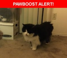 Is this your lost pet? Found in Nashville, TN 37211. Please spread the word so we can find the owner!  Black and white cat with gray collar with reflectors on it. Litterbox trained and very friendly.   Near Knolls Place, Nashville, TN