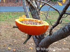 Nature Craft for Kids: Turn your leftover pumpkins into a bird feeder