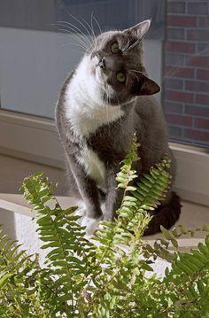 Small Pet Supplies Industrious Cream Cat Bowl Cat Supplies