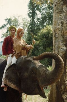 0 Ursula Andress and Jean-Paul Belmondo riding an elephant Honey Ryder, Ursula Andress, London England, Jeans, Elephant, Pictures, Animals, Image, Switzerland