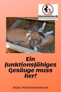 Die Milchleiste mit den Zitzen ist ein wichtiges Organ für jede Arterhaltung bei den Säugetieren. Umso mehr gilt es, die Zuchttiere auszuwählen, die auch den Nachwuchs ernähren können Fish, Pets, Animals, Genetics, Small Animals, Bunnies, Animales, Animaux, Animal Memes