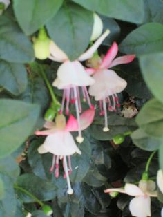 innamoramento dei fiori  http://raccontareunpaese.blogspot.it/2016/05/fiori-innamorati.html