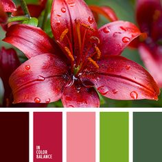 Color Palette (red and light green) Red Color Schemes, Color Combinations, Design Palette, Colour Pallette, Color Balance, Design Seeds, Color Blending, Warm Colors, Bright Colors