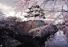 Sakura branches and temple <3