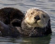 endangered marine life images   Blossom endangered species list: Conservation education animals: sea ...