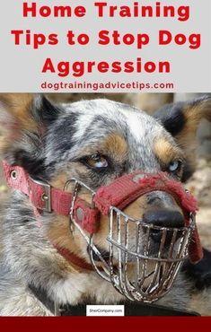 dog training business plan