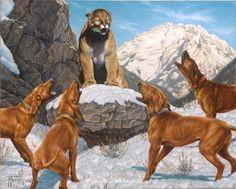 cougar mountain lion hounds ~ Redbone Fever by Tom Mansanarez wildlife art Hunting Art, Hunting Dogs, Animal Paintings, Animal Drawings, Mountain Lion Hunting, Hunting Drawings, Animals And Pets, Cute Animals, Pub Vintage