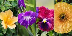 Εδώδιμα άνθη, 40 λουλούδια που τρώγονται | Τα Μυστικά του Κήπου Plants, Gardening, Lawn And Garden, Plant, Planets, Horticulture
