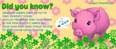 Interesting facts about pigs