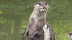 This is anotter video :v