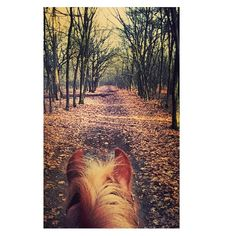 View of the day  #viewoftheday #horse #pony #woods #horsebackriding #mylittlepony #sun #rietheimsrio