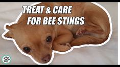 How to Treat and Care for Your Dog's Bee Sting Dog Bee Sting, Minka, Dog Paws, Dog Food Recipes, Your Dog, Wellness, Treats, Dogs, Sweet Like Candy